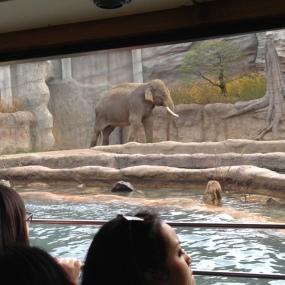 koshik the talking elephant
